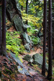 Narrow Footpath in Mountain Forest Royalty Free Stock Photo