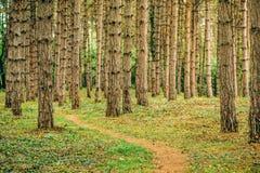 Narrow footpath through pine tree forest Stock Photo