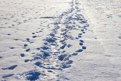 Narrow footpath on the snow Royalty Free Stock Image