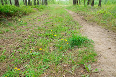 Narrow forest path Royalty Free Stock Images