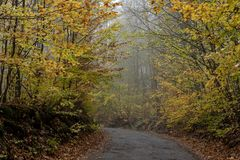 A narrow forest path in a mist between trees and shrubs with colored leaves. In autumn stock images