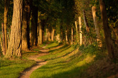 Narrow forest track Stock Photography