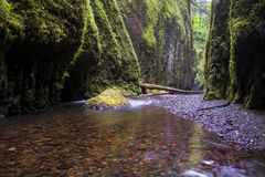 Narrow green river canyon Royalty Free Stock Image
