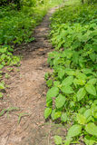 Narrow ground path in the grass. Small Narrow ground path in the grass Royalty Free Stock Photo