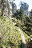 Narrow hiking trail in spring mountains with limestone rocks Royalty Free Stock Image