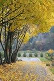 Narrow laneway in Autumn Stock Photo