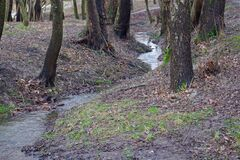 Free Narrow Meandering Stream With Clear Water Flowing In Small Ravine Among Trees Growing On Both Slopes And Brown Dry Fallen Leaves Royalty Free Stock Image - 181379906