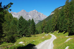 Narrow mountain road, forest and Alps near S-Charl. Switzerland, Europe Royalty Free Stock Photo