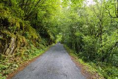 Narrow mountain road surrounded by trees and mossy rocks in a ty. Pical Atlantic oak forest in Galicia, Spain stock images