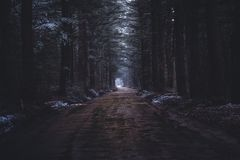 A narrow muddy road in a dark forest stock photo