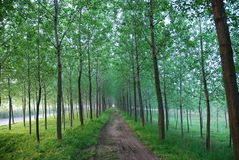 A narrow muddy road in woods Royalty Free Stock Photography