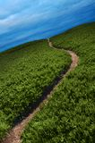 Narrow Path Stock Photos