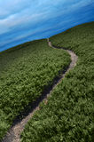Narrow Path Stock Image