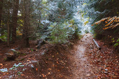 Narrow path in the autumn forest Royalty Free Stock Image