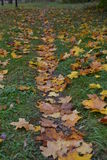 Narrow path in autumn park covered with yellow leaves Royalty Free Stock Photos