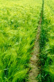 Narrow path through field Royalty Free Stock Photos