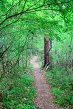 Narrow Path Through Forest Royalty Free Stock Images