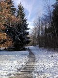 Narrow  path in forest Royalty Free Stock Photos