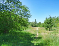 A narrow path on among the grass and trees Royalty Free Stock Image