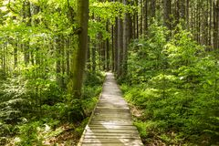 Narrow path lit by soft spring sunlight. Forest spring nature. Spring forest natural landscape with forest trees Royalty Free Stock Photography