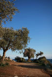 Narrow path with olive trees and sea Stock Photography