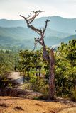 Narrow path of the Pai canyon Royalty Free Stock Image