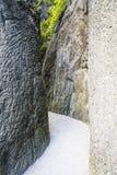 Narrow path Stock Image