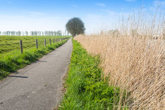 Narrow path in a rural area in the spring season Stock Images
