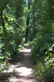 Narrow path snaking its way through a forest with sunlight shining through the tree tops. And trees enclosing everything Royalty Free Stock Photos