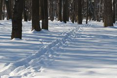 Narrow path in the snowy forest. Stock Images
