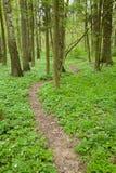 Narrow path through spring forest Royalty Free Stock Photos