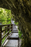 A narrow path with steps in a forest Stock Photos
