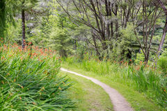 Narrow path surrounded by orange crocosmia flowers in the park Royalty Free Stock Photo