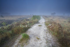 Narrow path on swamp in misty morning. Drenthe, Netherlands Stock Images