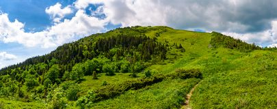 Narrow path to the mountain top. Beautiful panorama of summer landscape with grassy hills with forested slopes. huge cloud hang over the ridge Royalty Free Stock Images