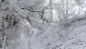 Narrow pathway between Snow covered trees
