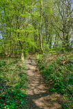 Narrow pathway in the woods in Springtime Stock Photography