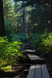 Narrow plank pathway climbs through boreal rainforest Royalty Free Stock Photography