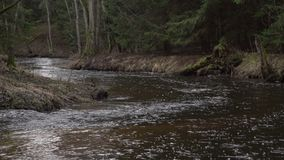 Narrow river flowing in an old grown forest. Fresh spring water stream running trough rooks in the woods