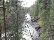 The narrow river in the forrest frame stock photography