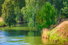 Narrow river and hanging green trees. On a sunny day royalty free stock image
