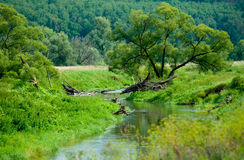 Narrow river in Russia. Landscape of a narrow river in Russia Royalty Free Stock Photography