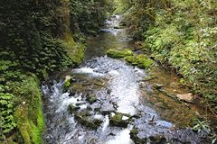 Narrow river stream with clear water and plants on either sides royalty free stock photography