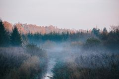 Narrow river surrounded by woods, covered in fog, with tree line in bakcground touched by autumn sunrise. royalty free stock photos