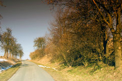 Narrow road. Surrounded by trees in spring Stock Image