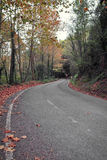 Narrow road through autumn forest Stock Image