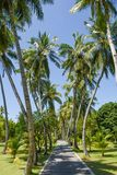 Narrow road among beautiful tall palm trees at the tropical island. At Maldives Stock Photos