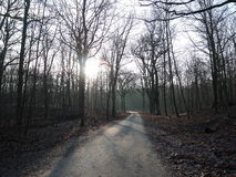 Narrow road in forest. With bare trees, withered leaves and winter low angle moody sunlight with long shadows of tree trunks across asphalt Royalty Free Stock Photos