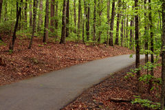 Narrow road through a forest Royalty Free Stock Photo