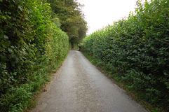 Narrow Road Through High Hedge. Narrow road with high hedges on each side, located in rural western England Stock Photo